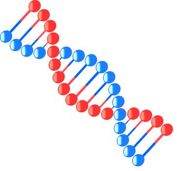核酸とは?